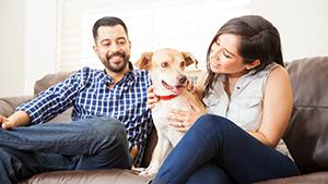 Pets Plus Us - pet insurance