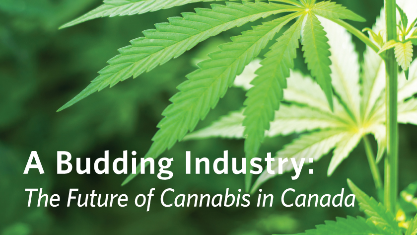 A Budding Industry: The Future of Cannabis in Canada