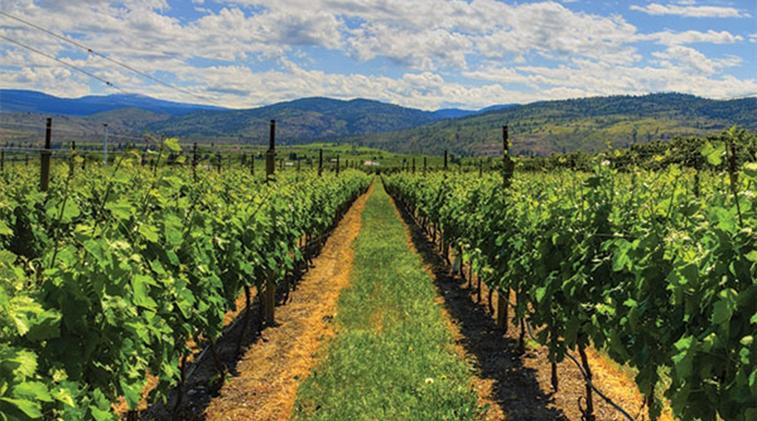 Okanagan Wine Discovery